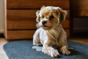 Anwendungsbeispiel - Liegeplatz für Hunde