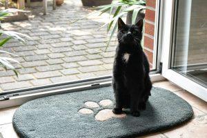 Schmutzfangmatten als Teppich für Katzen