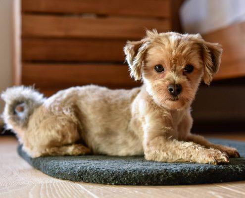 Dog 1 als Liegeplatz für Hunde
